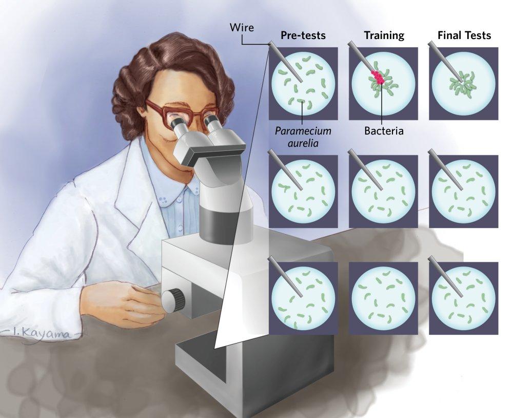 bunky trening 1
